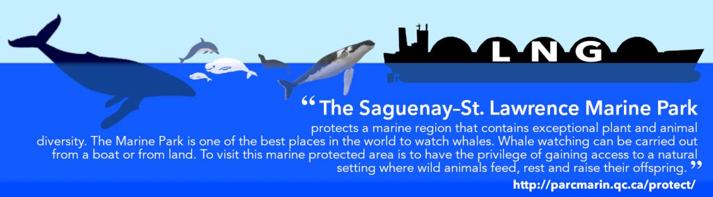 Graphic shows an LNG Tanker in the water with Blue Whale, dolphin, Beluga Whales, Seal and a Humpback Whale... just some of the woldlife found on the protected waters. The text reads: The Saguenay–St. Lawrence Marine Park protects a marine region that contains exceptional plant and animal diversity. The Marine Park is one of the best places in the world to watch whales. Whale watching can be carried out from a boat or from land. To visit this marine protected area is to have the privilege of gaining access to a natural setting where wild animals feed, rest and raise their offspring.